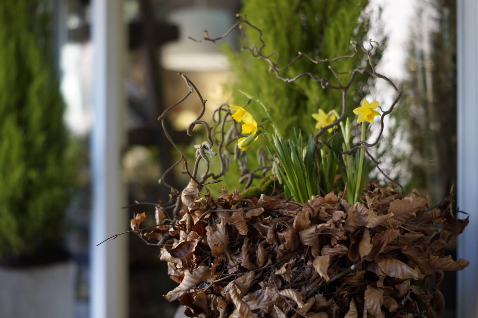 Öffnungszeiten Blumenhaus Busam Ostern