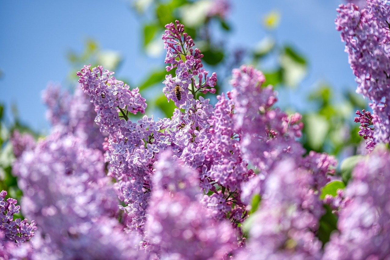Blumenhaus Busam hat wieder geöffnet