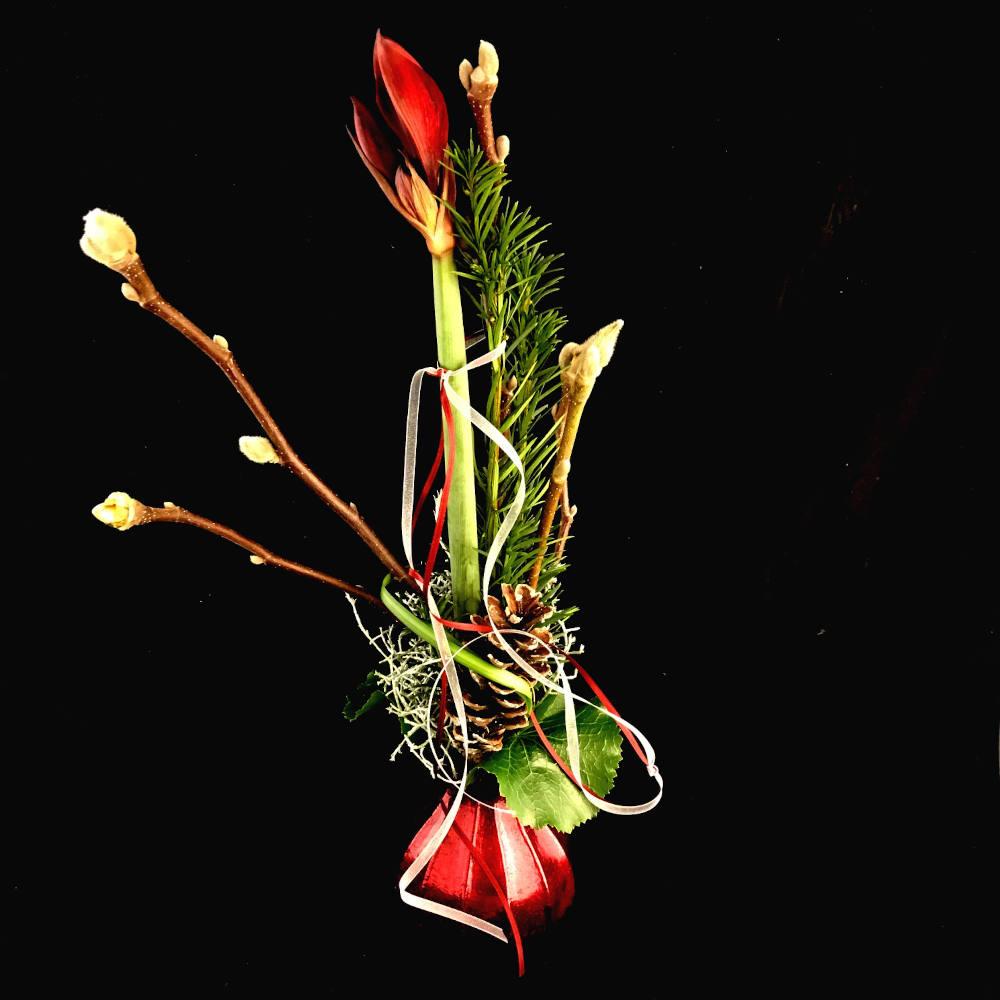 Amaryllis mit Vase